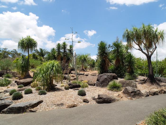 Mt Cootha Botanical Gardens Images Garden Ftempo